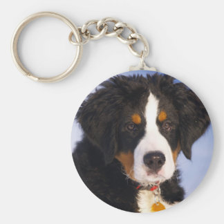 Cute Bernese Mountain Dog Puppy Picture Key Ring
