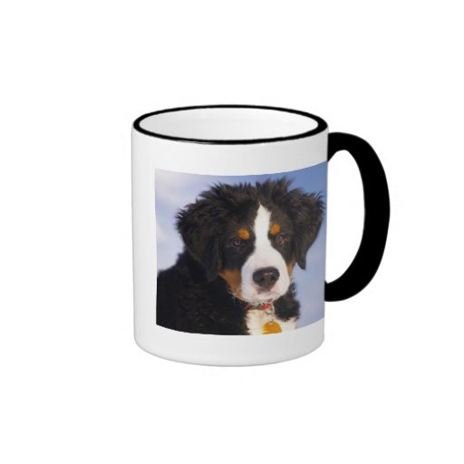 Cute Bernese Mountain Dog Puppy Picture Coffee Mugs