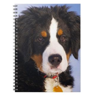 Cute Bernese Mountain Dog Puppy Picture Note Book