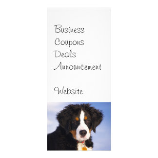 Cute Bernese Mountain Dog Puppy Picture Rack Cards