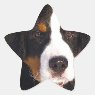 Cute Bernese mountain dog Star Sticker