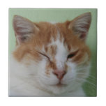 Cute Bi Color Cat Winking Ceramic Tile