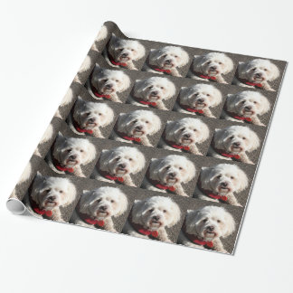 Cute bichon frise dog wrapping paper