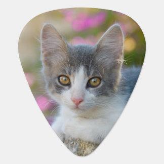 Cute Bicolor Kitten Fluffy Photo Cat Lovers - Plek Guitar Pick