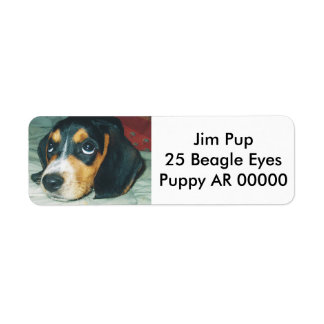 Cute Big Eyes Beagle Puppy