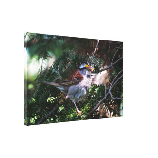 Cute Bird Canvas Print