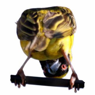 Cute Birdie Sculpture Pin Photo Sculpture Badge