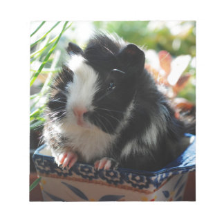 Cute Black and White Guinea Pig Notepad