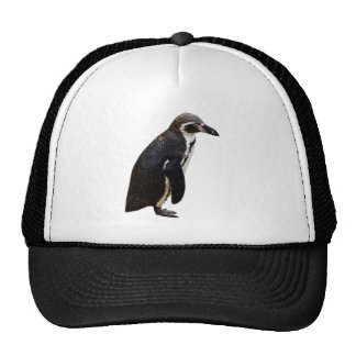 Cute Black and White Humboldt Penguin Hat