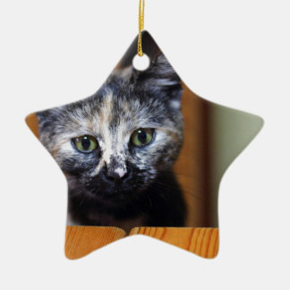 Cute Black and White Kitten Ceramic Star Decoration
