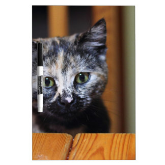Cute Black and White Kitten Dry Erase Board