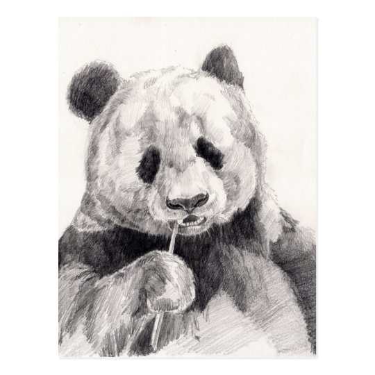 Cute Black and White Panda Illustration Postcard