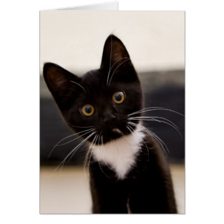 Cute Black And White Tuxedo Kitten Card