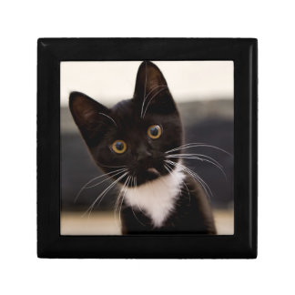Cute Black And White Tuxedo Kitten Gift Box