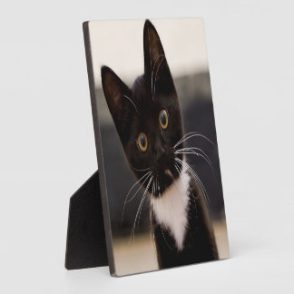 Cute Black And White Tuxedo Kitten Plaque