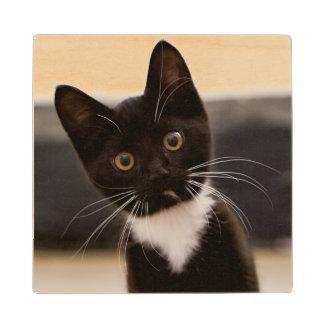 Cute Black And White Tuxedo Kitten Wood Coaster