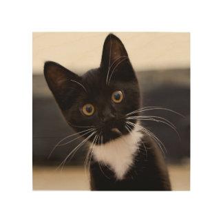 Cute Black And White Tuxedo Kitten Wood Wall Art