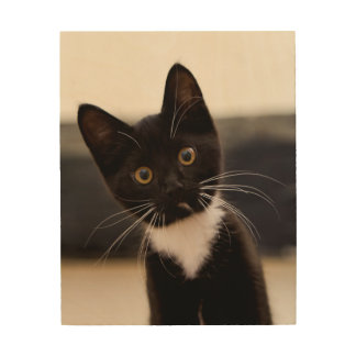 Cute Black And White Tuxedo Kitten Wood Wall Decor