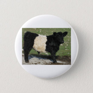Cute Black Belted Galloway Calf 6 Cm Round Badge