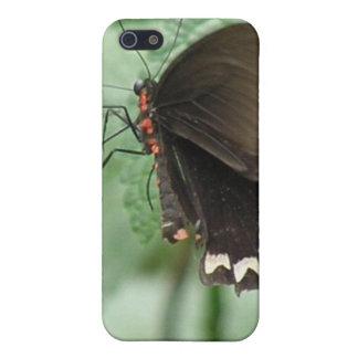 Cute Black Butterfly iPhone 4 Case