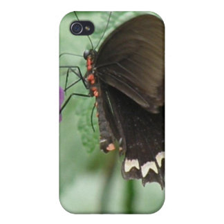 Cute Black Butterfly iPhone 4 Case