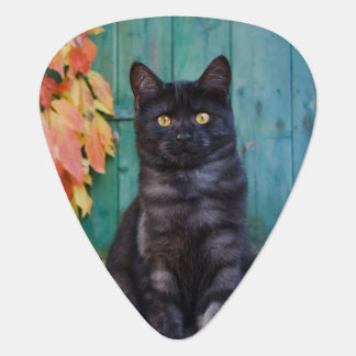 Cute Black Cat Kitten with Red Leaves Blue Door Guitar Pick