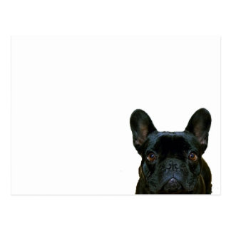 Cute Black French Bulldog Postcard