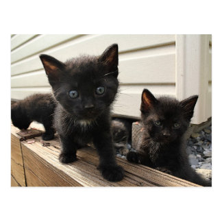 Cute Black Kittens in the Country Postcard