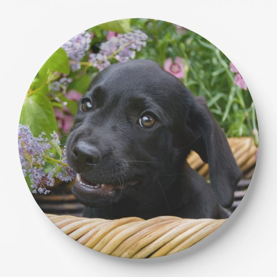 Cute Black Labrador Retriever Dog Puppy Pet Photo