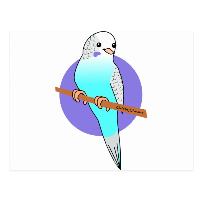 Cute Blue Budgie Postcard