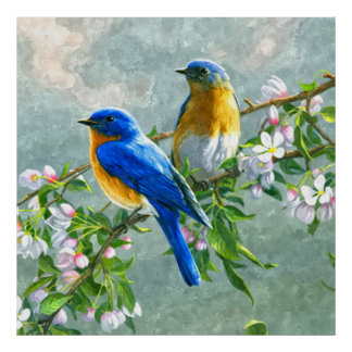 Cute Blue Yellow Birds Cherry Blossom Watercolor Poster