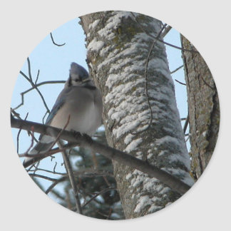 Cute bluejay round stickers