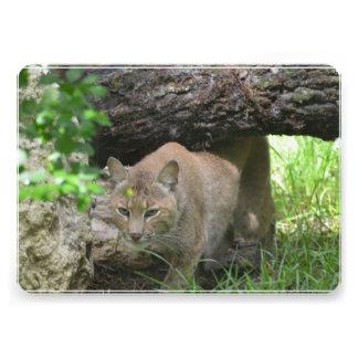 Cute Bobcat Custom Announcement