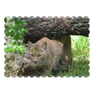 Cute Bobcat Custom Announcements