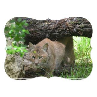 Cute Bobcat 13 Cm X 18 Cm Invitation Card