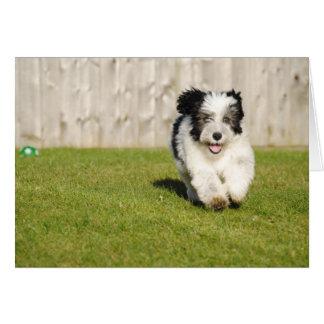 Cute Bobtail Sheepdog Card