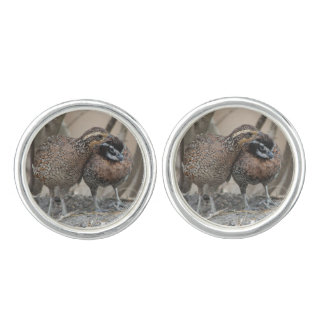 Cute Bobwhite Quail pair Nuzzling and preening Cuff Links