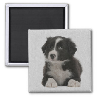 Cute Border Collie Puppy Dog Custom Magnet