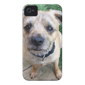 Cute border terrier iPhone 4 cover