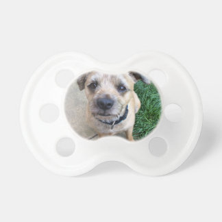 Cute border terrier dummy