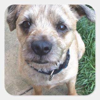 Cute border terrier square sticker