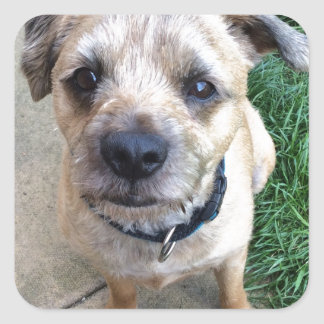 Cute border terrier stickers