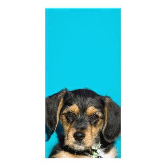 Cute Borkie Puppy Photo Cards