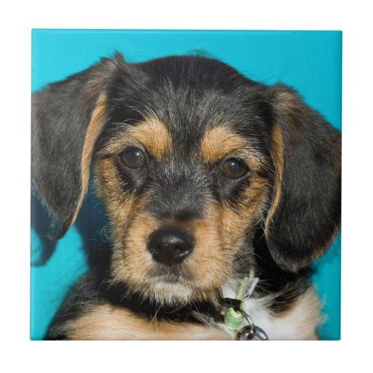 Cute Borkie Puppy Tile