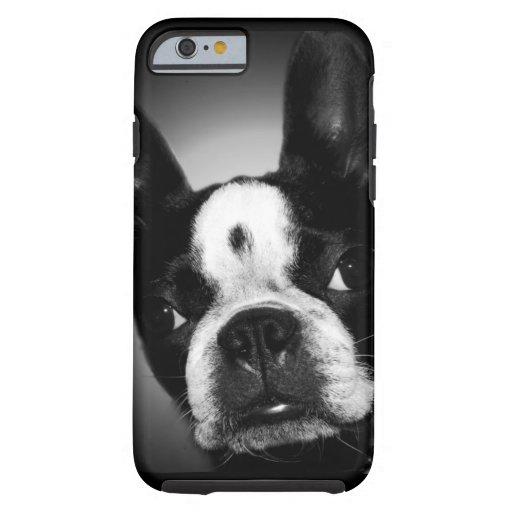 Cute Boston Terrier dog iPhone 6 Case