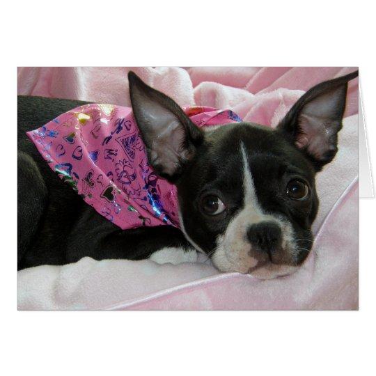 Cute Boston Terrier Puppy Card