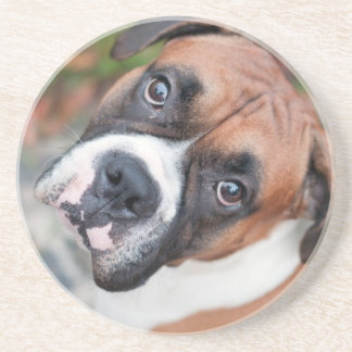 Cute boxer dog drink coasters