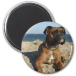 Cute Boxer Dog Magnet Refrigerator Magnets