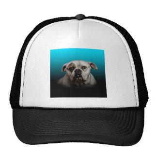Cute Boxer Dog w Blue Black Gradient  background Cap