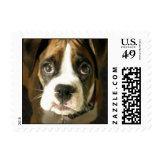 Cute Boxer Puppy Small Stamp